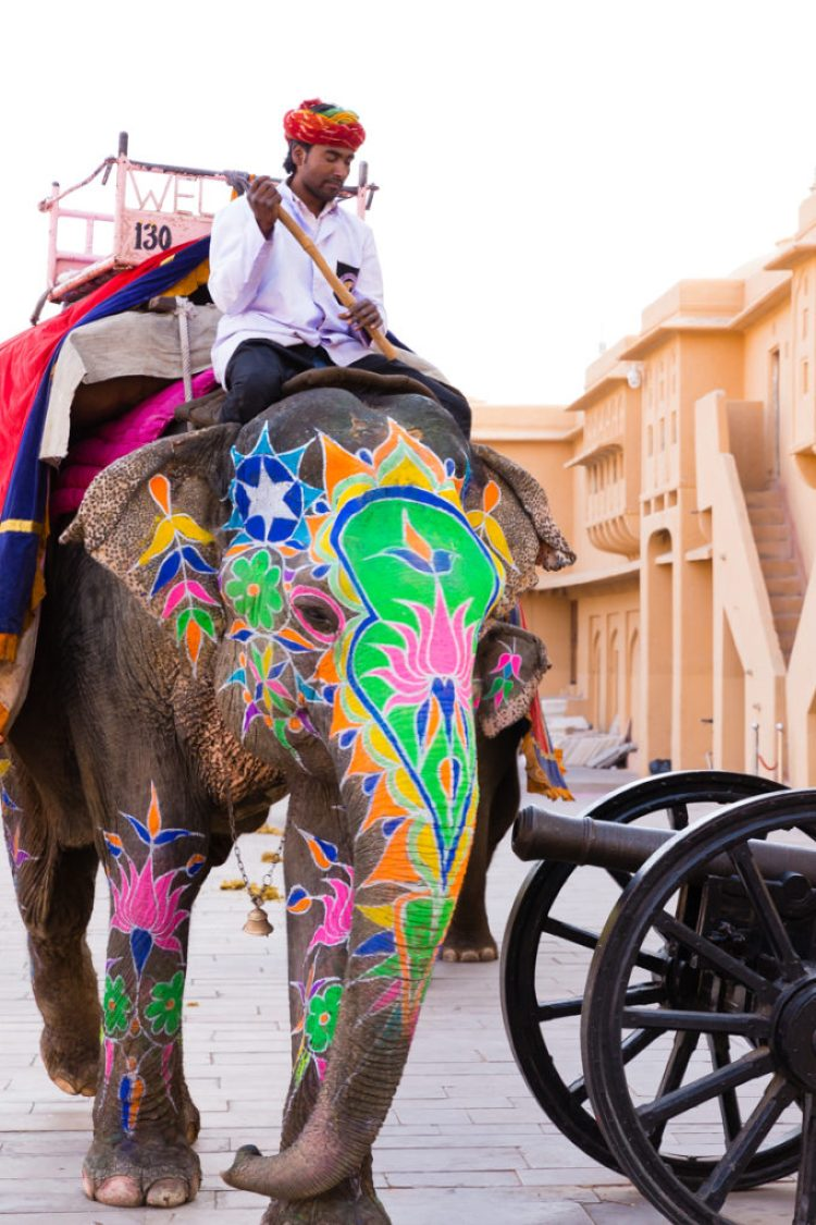 Colorful Elephants painted for Holiday at the Amber Fort