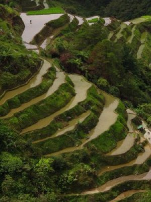 Viewpoint Rice Terraces