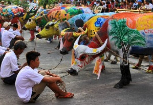 Carabao Painting Contest (Karbo Festival)