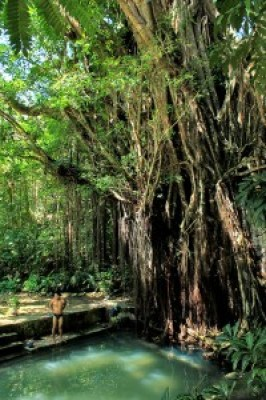 Enchanted 400-Year-Old Balete (Banyan) Tree