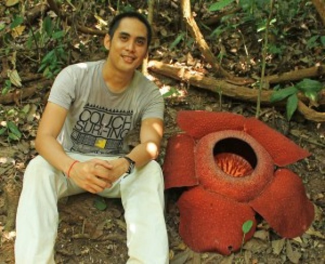 Rafflesia kerii at Lojing Highlands