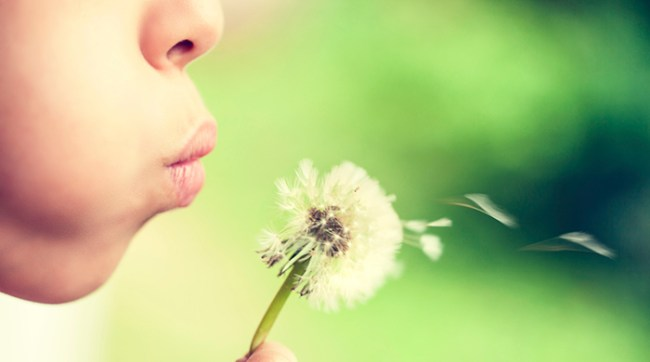Blowing a dandelion into the air