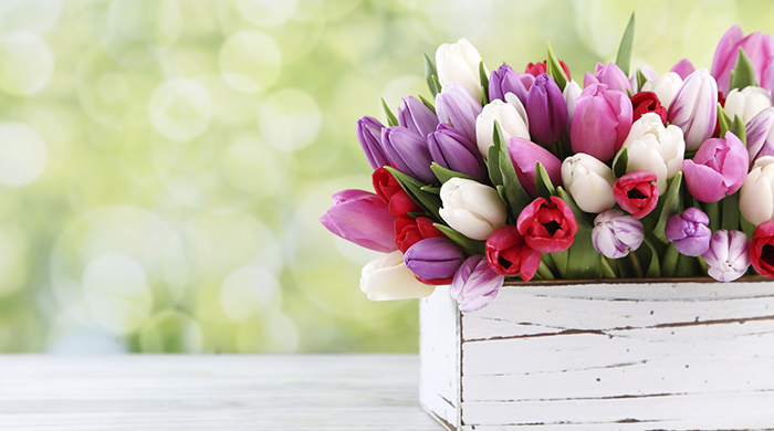 White box of white, purple, pink and red tulips