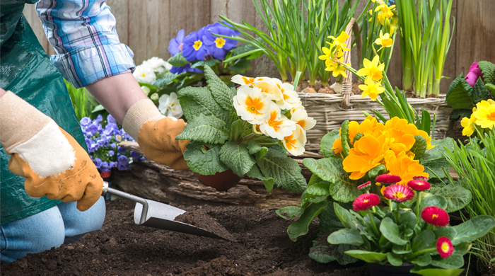 How to Revamp Your Home Decor and Garden on a Budget