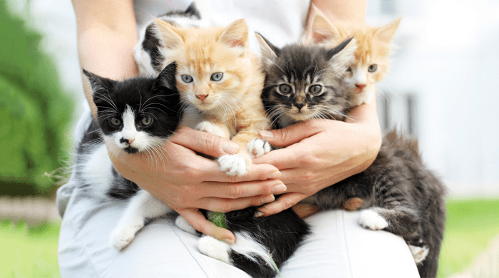 Hands holding five kittens