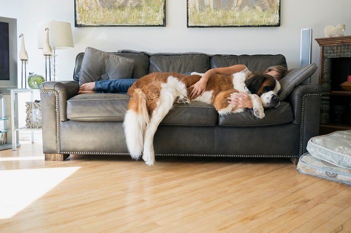 Woman and Saint Bernard dog laying on sofa
