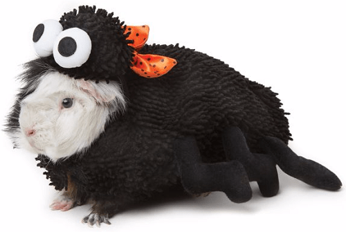 Thrills & Chills™ Pet Halloween Spider Costume