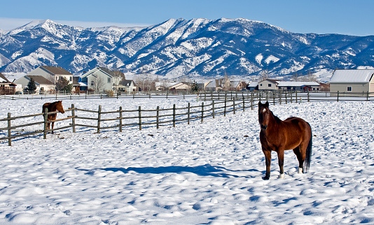 Montana mountains during winter with horses in a pasture