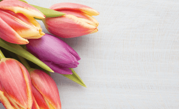 The Best Flowers to Buy for Valentine's Day