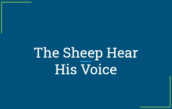 The Sheep Hear His Voice