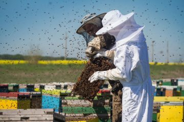 Beekeeping Suit for beekeeper