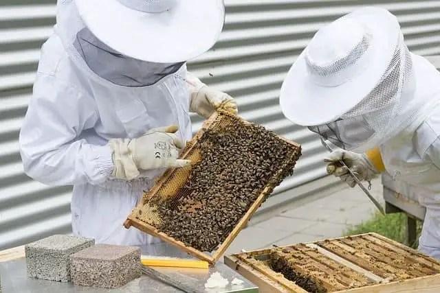 What is Beekeeping