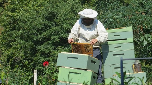 costs of beekeeping - costs of becoming a beekeeper