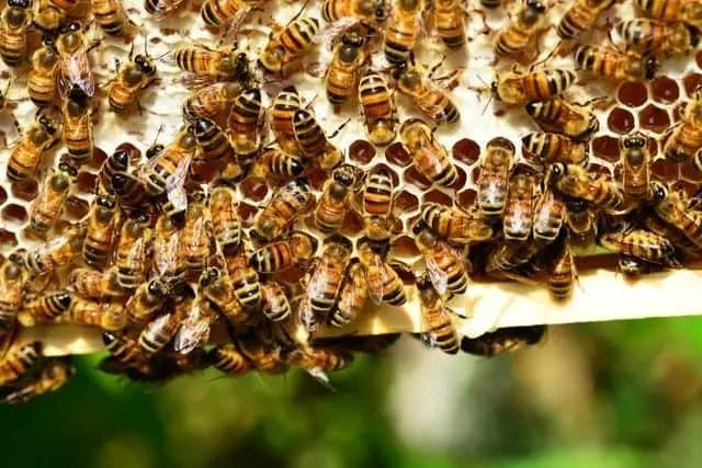 Top 2 Best Plastic Bee Hives