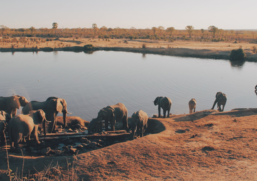This image has an empty alt attribute; its file name is Zimbabwe-popular-NGO-Sues-Govt-Over-Alleged-Planned-to-Export-Elephants-to-China.jpg