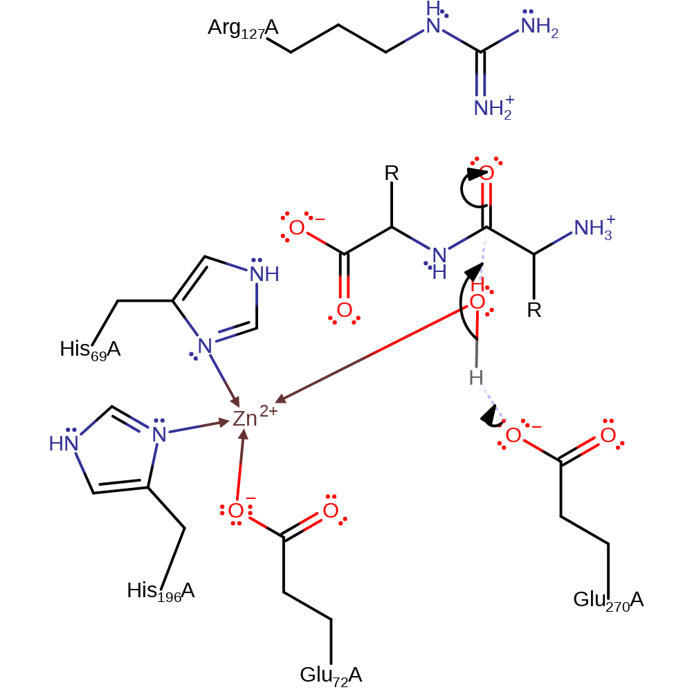 33 What Is The Purpose Of The Peptide Bond That Is Shown