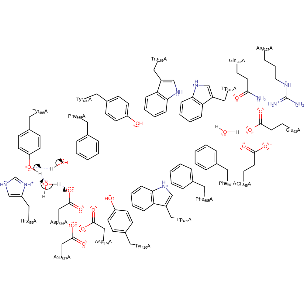 medium resolution of in fact the product ratio of hopene and hopanol has been reported to be significantly altered in e45a and e45d mutants of i a acidocaldarius i shc