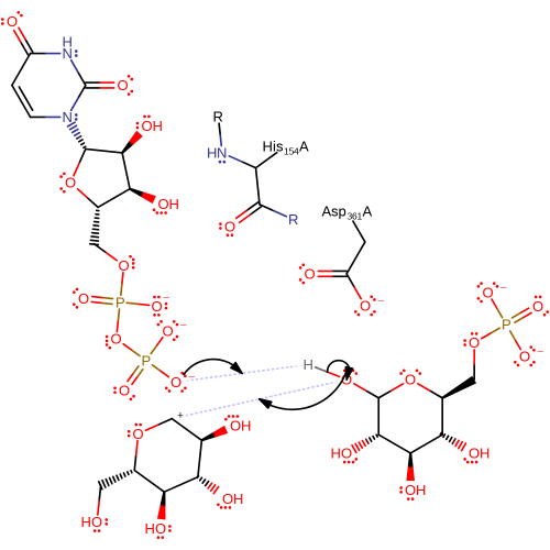 small resolution of concomitant proton transfer and nucleophilic attack of o1 on glucose 6 phosphate on anomeric carbon on glucose intermediate