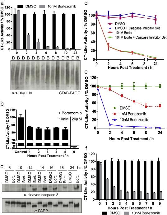 Bortezomib Amplifies Effect on Intracellular Proteasomes