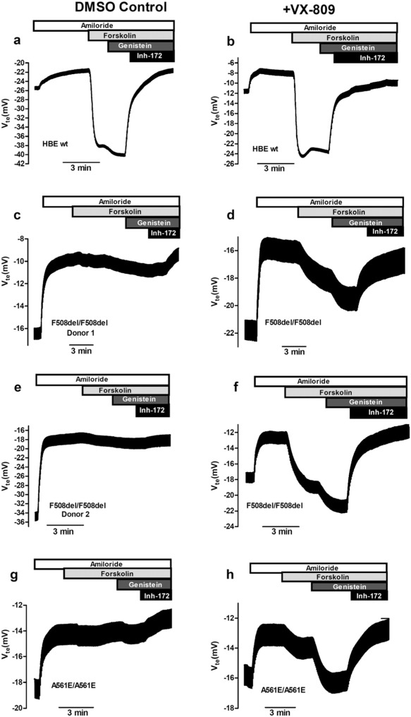 Measurements of Functional Responses in Human Primary Lung