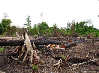 HP se compromete con la deforestación cero para el año 2020