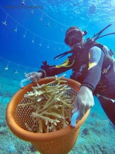 eBlue_economy-coral-restoration_0