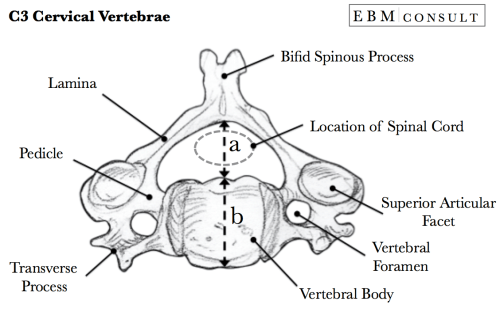 small resolution of torg ratio for determining presence of spinal canal stenosisspine diagram canal 7