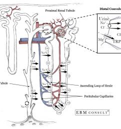 nephron anatomy physiology distal convoluted tubule [ 1522 x 1160 Pixel ]