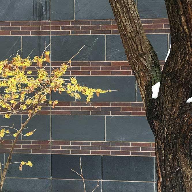BPCyellowflowertreesnowIMG_6419
