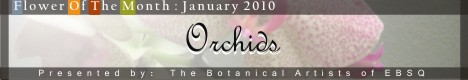 Online Art Exhibit:Flower of the Month: Orchids