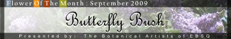 Online Art Exhibit:Flower of the Month: Butterfly Bush