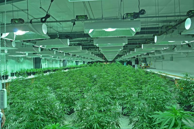 Marijuana growing facility coming to Jefferson County? -