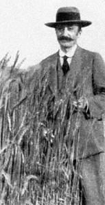 Strampelli in un campo di grano (Fonte Wikipedia)