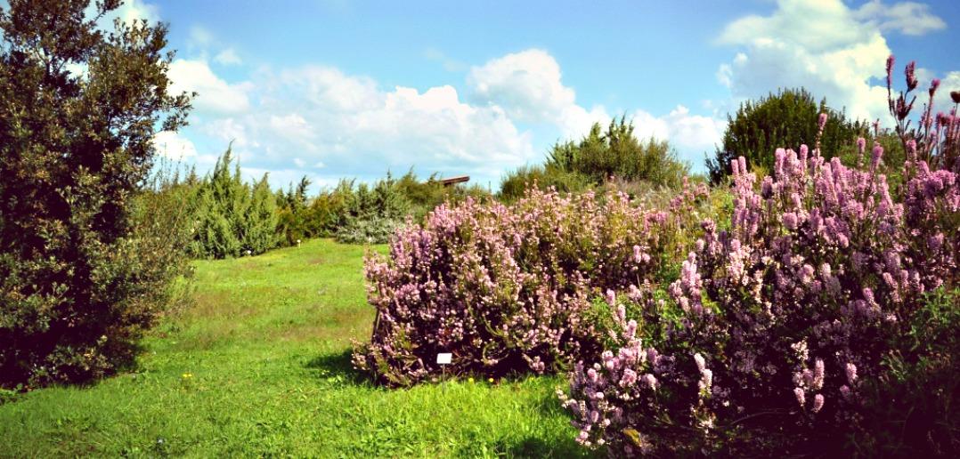 Il Giardino Botanico Mediterraneo