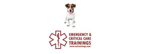 pet first aid ecctrainings
