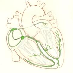 Cardiac Conduction System Diagram 2000 Watts Power Amplifier Schematic Illustration Ecg Guru Instructor