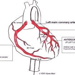 Anatomical Heart Diagram Posterior 2003 Mg Tf Wiring Coronary Arteries Labeled Ecg Guru Instructor Resources