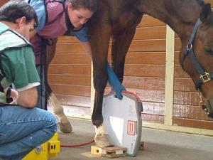 Radiologie vétérinaire