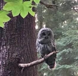 The Owl Whisperer Echoes of Jesus