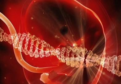 La loi bioéthique (2ème partie)