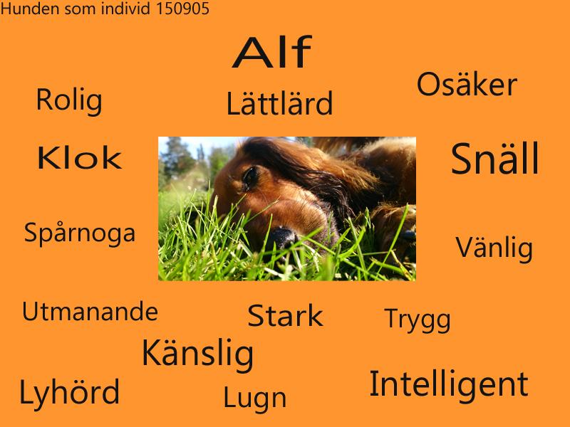 Flockhantering Alf