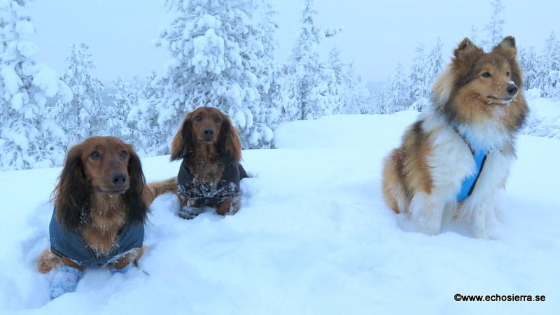Alf, Theo och Messi