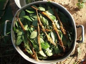 http://en.wikipedia.org/wiki/Ayahuasca#mediaviewer/File:Ayahuasca_and_chacruna_cocinando.jpg