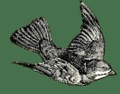 vintage_bird