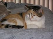Ali Cat