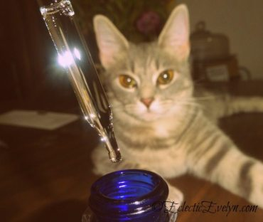 Radha Tea Tree Oil #WafflesTheCat EclecticEvelyn.com
