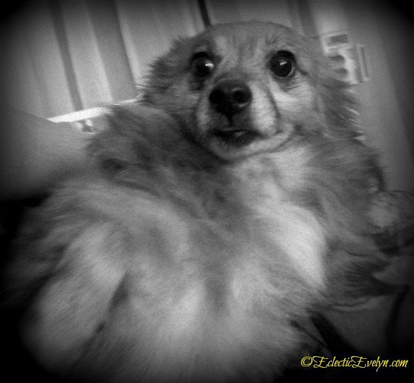Did you say bath? #WordlessWednesday EclecticEvelyn.com