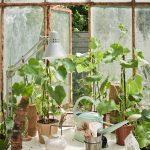 It's trending: Botanical Vibes