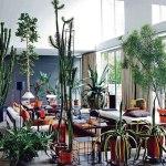 Maruzio Zucchi's urban jungle home