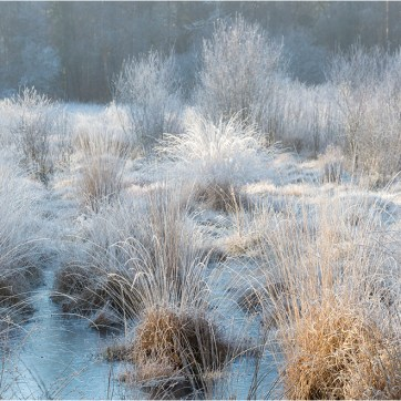 Frozen Marsh, Frozen pond, New Forest, The New Forest, Frosted reed bed, Landscape photography